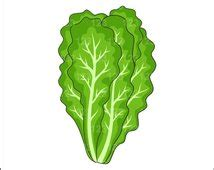 Essay on green leafy vegetables